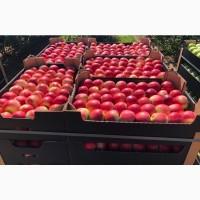 Продажа яблок: Голден. Ред дж-принс. Чемпион