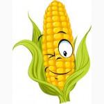 Закупаем кукурузу для переработки