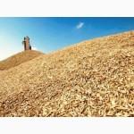 Закупаем в любом колличестве Пшеницу разноклассовую
