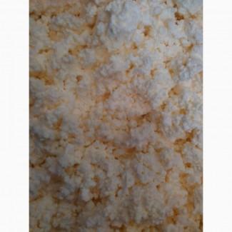 Продам сыр кисломолочный оптом