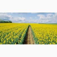 Предприятие закупает зерновые культуры РАПС и др. любого качества