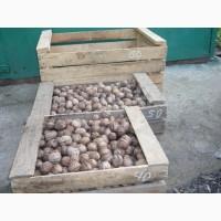 Продам орехи скупщикам