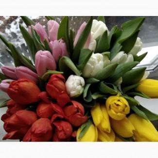 Тюльпан к 8 марта оптом