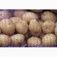 Картофель оптом со склада Харьков