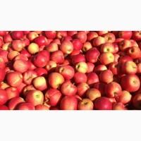 Продам яблука з домашнього саду