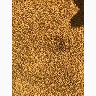Посевмат горчицы+ семена на сидерат