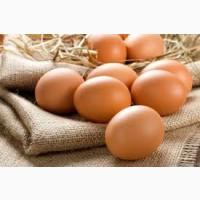 Всегда В Наличии Инкубационное Яйцо Мясо-Яичных Пород