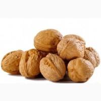 Закупаем целый грецкий орех