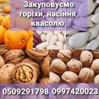 Систематично закуповуємо грецькі горіхи, гарбузове насіння, квасолю урожаю 2021р