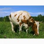 Комбикорм для КРС (крупного рогатого скота)