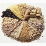 Закупаю фуражную пшеницу, кукурузу, ячмень, отруби в объемах до 5 тонн