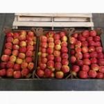 Яблоки из Польши оптом