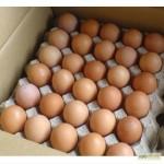 Продам яйцо инкубационное мясояичной породы - Фокси Чик