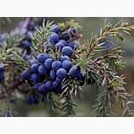 Продам высококачественные ягоды можжевельника сушёные оптом