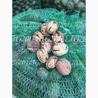 Продажа ядра грецкого ореха. 2018