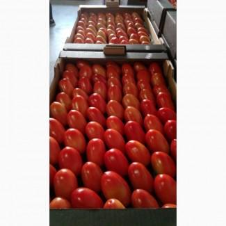 Томат сливовидный оптом. Купить томат от производителя. Tomate Pera Caniles