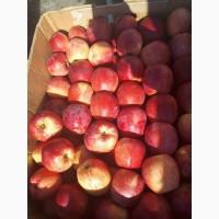 Яблоки калиброванные оптом со склада Харьков