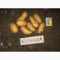 Предлагаю ранний картофель Киранда