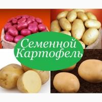 Картофель посевной/посадочный