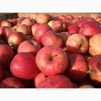 Купимо яблука для переробки в Україні