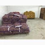 ООООЛКАР продаст картофель, Гранада, Бела Роса. Картошка чистая, без болезней, фракция 5