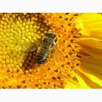Закупівля меду та воску оптом Ульянівський, Голованівський, Гайворонський р-ни