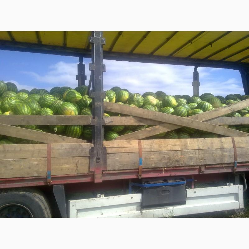 Фото 12. Продаю семена арбуза F2 Топган и Талисман