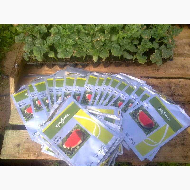 Фото 2. Продаю семена арбуза F2 Топган и Талисман