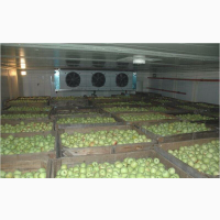 Продам яблоко на експорт з холодильника
