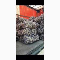 Продаём картофель оптом сорт Аризона и Романо