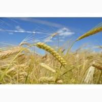 Предприятие закупает ячмень по всей Украине