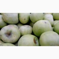 Закупаем яблоки на переработку