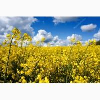 Продаем РАПС без ГМО