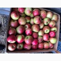 Продам яблука з саду урожай 2021 року