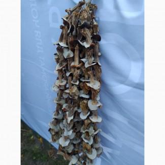 Продам білі гриби, сушені, 1 сорту
